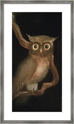 Just Lookin Framed Print by Paul Morgan