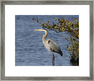 Framed Print featuring the photograph Just Need A Little Shade by Jeanne Andrews