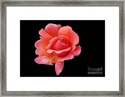 Framed Print featuring the photograph Just Peachy by Cindy Manero