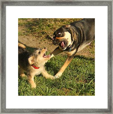 Just Playin' Framed Print by PMG Images