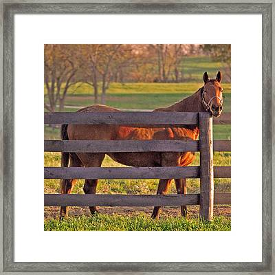 Just Saying Hi Framed Print
