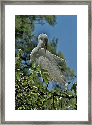 Framed Print featuring the photograph Just So by Joseph Yarbrough