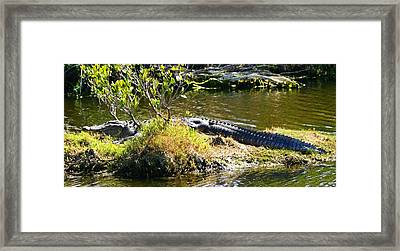Framed Print featuring the photograph Just Taken In A Few Rays by Jeanne Andrews