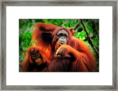 Framed Print featuring the photograph Just The Two Of Us by Lynn Hughes