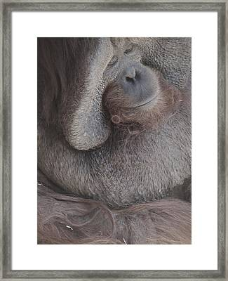Just Thinking Framed Print by Todd Sherlock