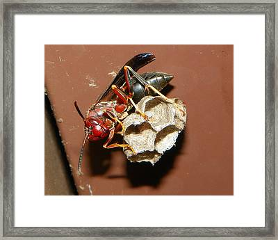 Framed Print featuring the photograph Just Try Me by Chad and Stacey Hall