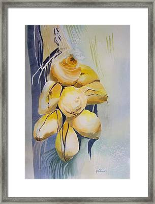 Juvenile Coconuts Framed Print by Richard Willows