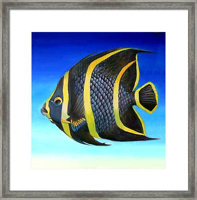 Juvenile French Angelfish Framed Print by Nancy Tilles