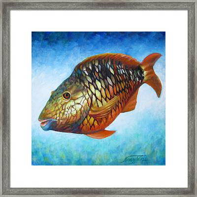 Juvenile Parrot Fish Framed Print by Nancy Tilles