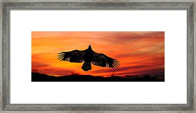 Framed Print featuring the photograph Juvenile Sunset  by Randall Branham