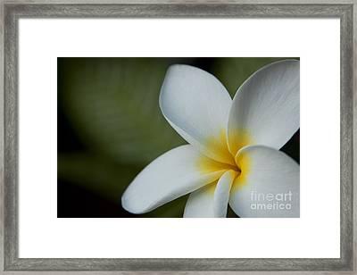 Kaena Mana I Ka Lani Kaulani Na Pua Plumeria Hawaii Framed Print by Sharon Mau