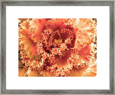 Kale Plant 2 Framed Print by Sandi OReilly