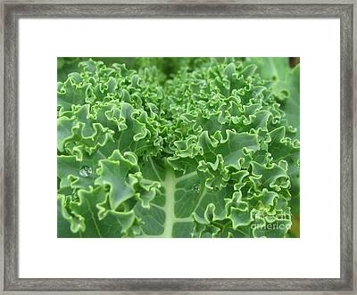 Kale Framed Print by Tina Marie