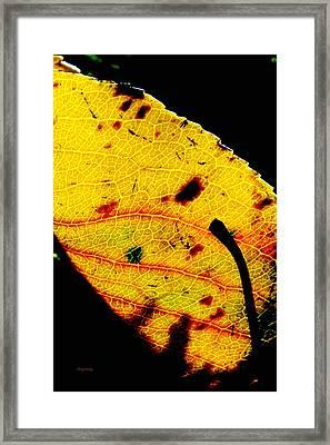 Kaleidoscope Framed Print by Ken Young