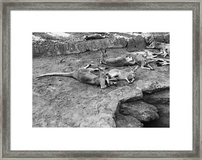 Framed Print featuring the photograph Kangaroo Court by Louis Nugent