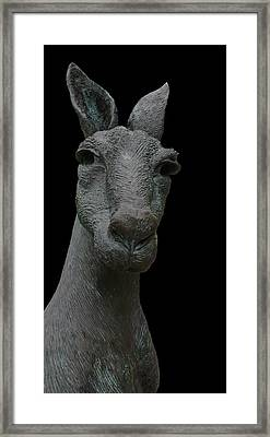 Kangaroo Smith Close On Black Framed Print by Gregory Smith
