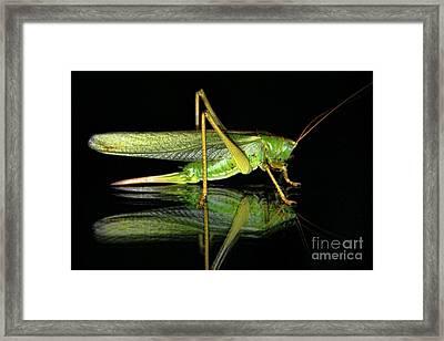 Katydid Reflection Framed Print by Kasia Bitner