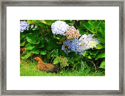 Framed Print featuring the photograph Kauai Wildlife by Lynn Bauer