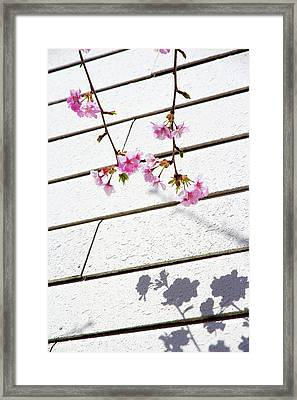 Kawadu Sakura Framed Print by Privacy Policy