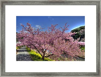 Framed Print featuring the photograph Kawazu Sakura-1 by Tad Kanazaki