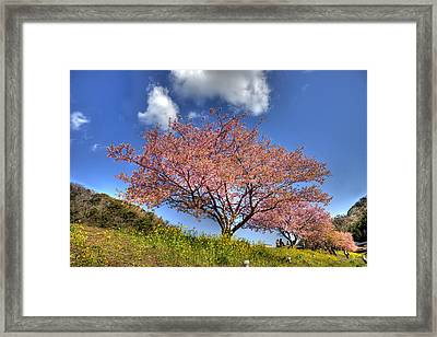 Framed Print featuring the photograph Kawazu Sakura-ii by Tad Kanazaki