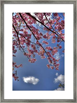 Framed Print featuring the photograph Kawazu Sakura-iii by Tad Kanazaki