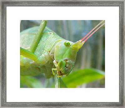 Framed Print featuring the photograph Kaydid by Chad and Stacey Hall