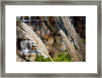 Kensington Bokeh Framed Print by Harvey Barrison