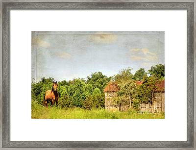 Kentucky Framed Print by Darren Fisher