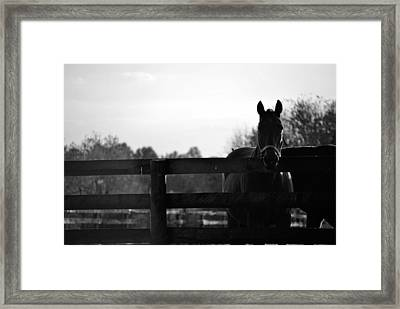 Kentucky Look Framed Print