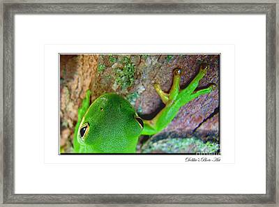Framed Print featuring the photograph Kermit's Kuzin by Debbie Portwood