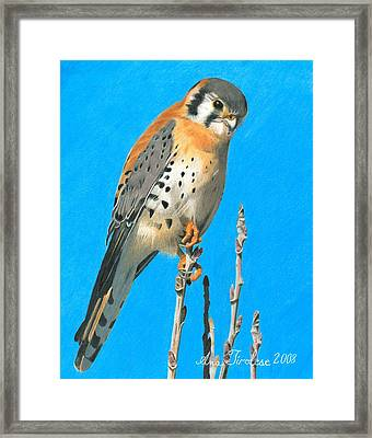 Framed Print featuring the drawing Kestrel by Ana Tirolese
