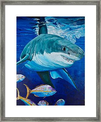 Kids Love Sharks Framed Print by Terry Gill