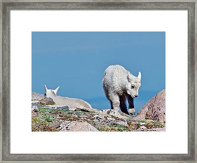 Framed Print featuring the photograph Kids On The Tundra by Stephen  Johnson