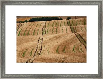Kiel Canal Farm Framed Print by Harvey Barrison