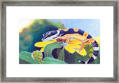Framed Print featuring the drawing Kiiro The Gecko by Ana Tirolese