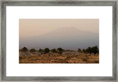 Kilimanjaro Dusk Framed Print by Joe Bonita