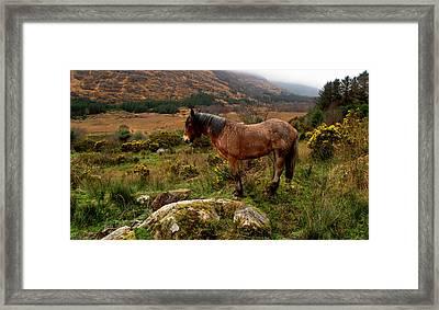 Killarney National Park Framed Print by Barbara Walsh