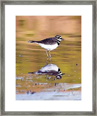 Killdeer Reflection Framed Print