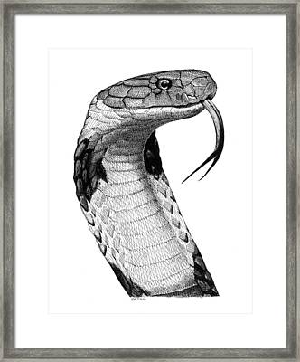 King Cobra Framed Print