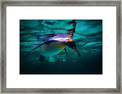 King Dive Framed Print