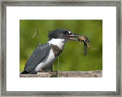 King Fisher Lunch Framed Print