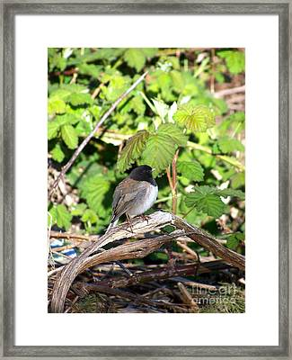 King Of The Blackberry Brier Framed Print by KD Johnson