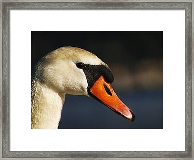 Framed Print featuring the photograph King Of The Fowl by Gerald Strine