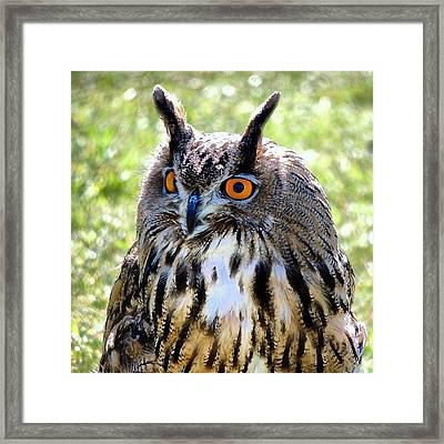 King Owl Framed Print