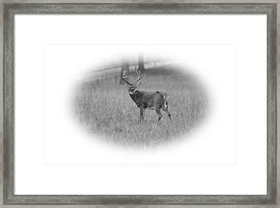King Framed Print by Todd Hostetter