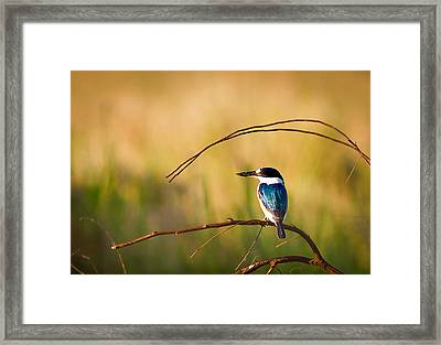 Kingfisher Framed Print by Johan Larson