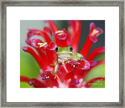 Framed Print featuring the photograph Kiss A Prince Frog by Luana K Perez