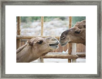Kiss Me Framed Print by Molly Heng