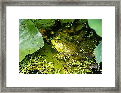 Kiss Me Framed Print by Ursula Lawrence